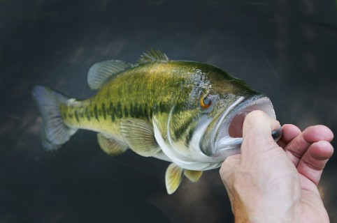 Bass Fishing Clear Water