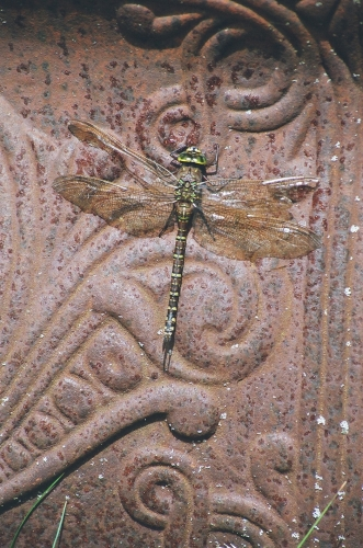 a large green and brown dragonfly stops for a rest on the back of a chair.