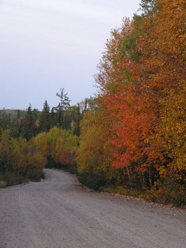 Check out the beautiful colours the trees in the Patricia Region are displaying.  With reminders like this, we know that hunting season is upon us.