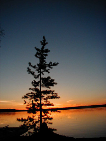 The silhouette of a lone pine shows up against the colours of a summer sunset over the lake.