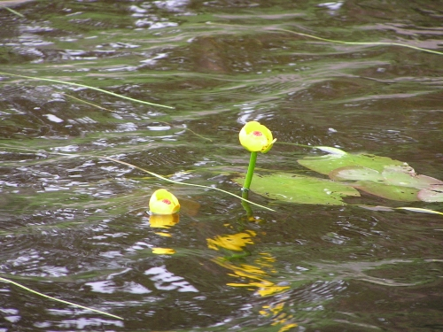 A common site in the area lakes are water lillies. This one added some colour to the lake when we were out fishing.
