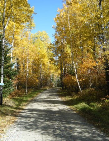 Some nice fall colours show on the leaves, signalling cooler temperatures. Fall is a colourful time of year in the Patricia Region.
