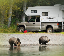 How to Avoid Attracting Bears While Camping